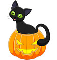 cartoon funny cat with halloween pumpkin vector image vector image