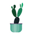 green house plant in pot leaf cactus flower flat vector image vector image