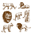 Hand drawn lion set vector image