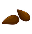 two seeds of apple fruit vector image vector image