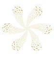 carrot centrifugal flower cluster vector image