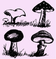 mushrooms edible inedible vector image vector image
