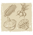 picture of vegetables vector image vector image