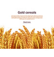 realistic cereals background template ears vector image vector image