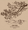 Branch of Pine Tree vector image vector image