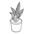 potted flower hand drawn doodle plant in flower vector image