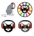 cat in the music headphones vector image