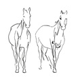 doble horse vector image