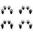 black footprints of raccoon vector image vector image