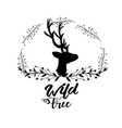 Branches around of deer wild animal vector image