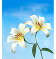 Holiday background with two white lilies vector image vector image