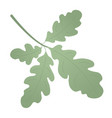 oak green leaf for decoration and detailed or vector image vector image
