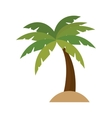 tree palm isolated icon vector image