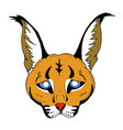 caracal mask vector image vector image