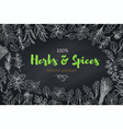 culinary herbs and spice template vector image