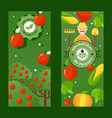 fruit and vegetable store vertical banners vector image vector image