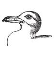 killiwake gull vintage vector image vector image