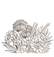 monochrome bouquet of chamomile isolated on white vector image