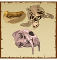 Set of fossil skeletons three different animals vector image vector image