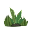 Tropical Plant With Big Leaves Jungle Landscape vector image