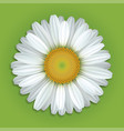 white chamomile flower vector image