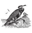 double crested cormorant vintage vector image vector image