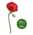 single red poppy flower beautiful vector image