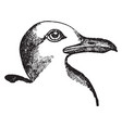 small black backed gull vintage vector image vector image