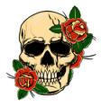 vintage human skull with roses design element vector image