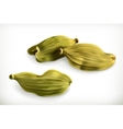 Cardamom icons vector image vector image
