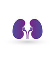 simple kidneys purple gradient icon symbol and vector image