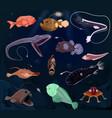 angler fish seafish predator character with vector image