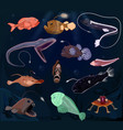 angler fish seafish predator character with vector image vector image