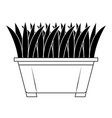grass in pot icon vector image