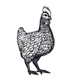 hen or chicken hand drawn with contour lines on vector image vector image