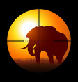 hunter targeting an elephant vector image vector image