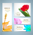 Seasonal Flowers Layouts vector image vector image