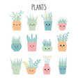 set of hand drawn plants flowers in pots vector image