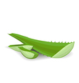cut aloe leaves on white background vector image
