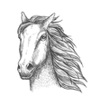 Racehorse stallion sketch for horse racing theme vector image vector image
