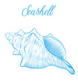 sea shell hand drawn blue linear vector image