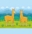 two llamas vector image