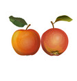 two red apples vector image
