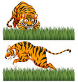 two scenes of wild tiger vector image vector image