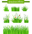 border set with green grass and flower vector image vector image