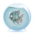cartoon angelfish vector image vector image