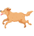Dog with brown fur running vector image