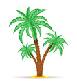 palm tree 06 vector image vector image
