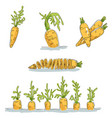 set with colored images of carrot made in vector image