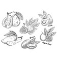 sketch of guava and avocado fig and mango durian vector image vector image